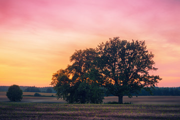 Sunset with trees over yellow and pink sky