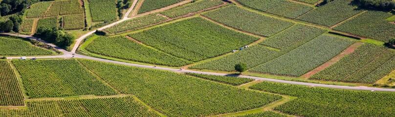 Vue aérienne et panoramique d'une route traversant des vignes Wall mural