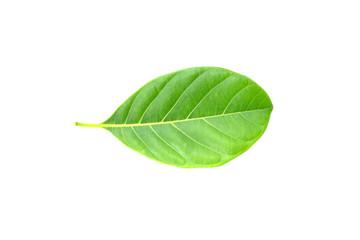 jackfruit leaf isolated on white background