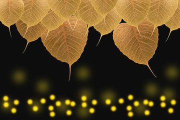 Abstract of pho leaf ( Bodhi Tree) background