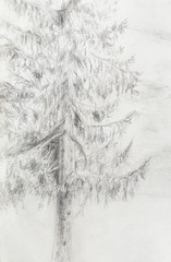 pencil drawing spruce on old paper background.