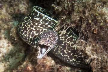 Unterwasser - Riff - Fisch - Muräne - Tauchen - Curacao - Karibik