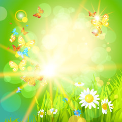 Positive summer background with flowers