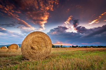 Wall Mural - Agricultural field with hay bales at sunset.