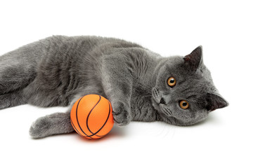 gray cat with an orange ball on a white background