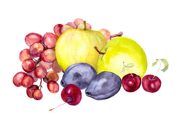 Watercolor fruits: apple, grape, cherry, plum. Watercolour drawing