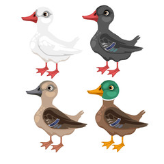 Four cartoon duck in different colors, vector