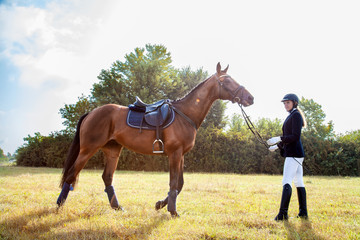 Beautiful girl jockey stand next to her brown horse wearing special uniform on a blue sky and yellow field background on a sunny day. Equitation sport competition and activity.