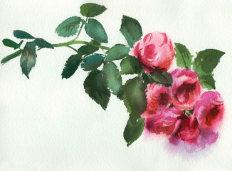 pink roses, watercolor, drawing on textured paper