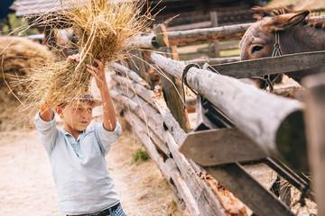 Boy help to feed a donkey at the farm