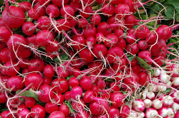 Red and white wild radish bundles with roots