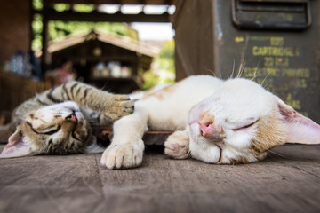 two Cat sleeping on the wood ground