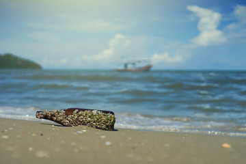 sea acorn colony on a brown glass bottle dumped pollute at the sand beach,blurred sea and blue sky in background,filtered image,selective focus,light effect added