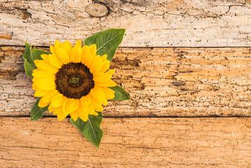 Sonnenblume Blüte als Grußkarte Glückwunschkarte
