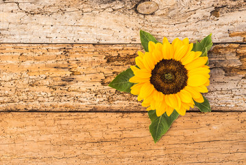 Sonnenblume auf Holz Hintergrund