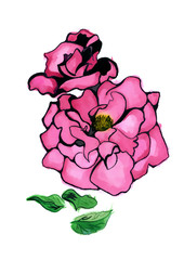 Water color drawing Roses