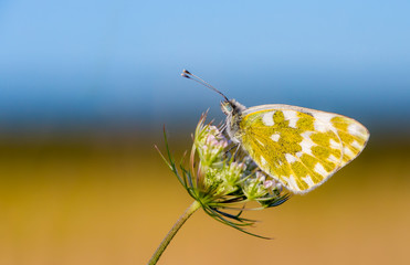 A butterfly sits on a summer meadow