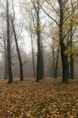 Autumn Park, overcast
