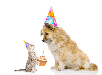 cat congratulates dog on his birthday. isolated on white