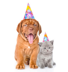 Bordeaux puppy dog and scottish kitten with birthday hats. isolated on white