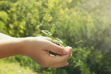 Child holding soil and plant in hands outdoor