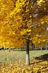 autumn foliage, close up