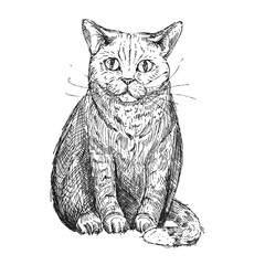 Hand drawn vector illustration of cat. sketch. Vector eps 8
