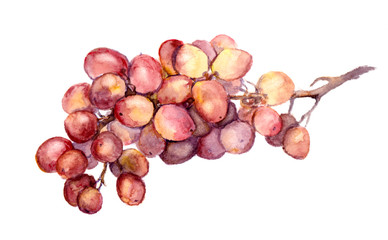 Red watercolor grape