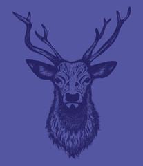 Deer head, vintage hand drawn illustration