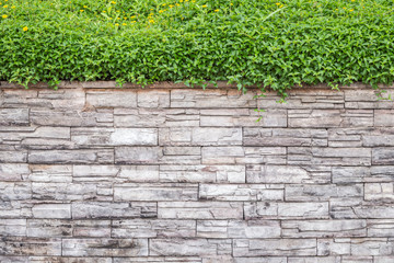 Pattern of natural stone wall and green ivy. Garden decorative