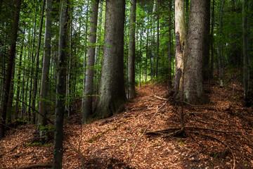 Romanian forest backgound