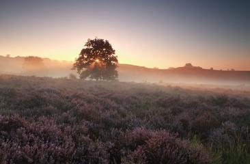 misty summer sunrise on heathland