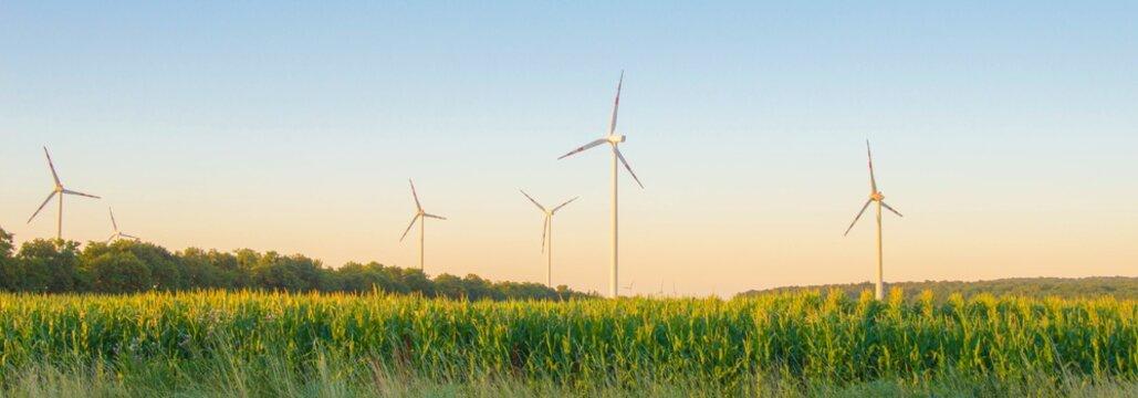 Windpark und Maisfeld in Österreich