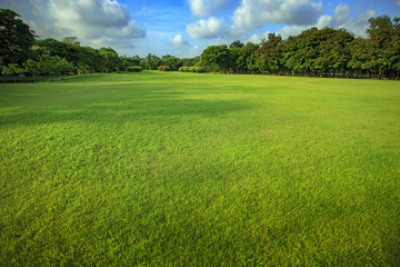 beautiful morning light of green grass lawn in public park use a