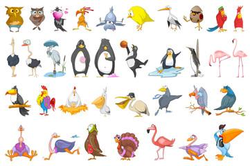 Vector set of various birds illustrations.