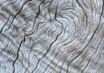 fondo textura de madera tronco antiguo