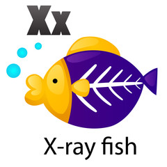 Alphabet letter X-X-ray fish