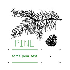 Pinecone Vector illustration, pine tree