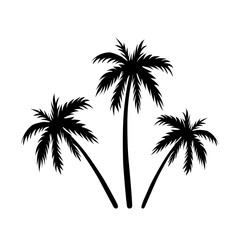 Three palms sketch. Black coconut tree silhouette, isolated on white background. Symbol of tropical nature, beach, summer holiday, travel. Floral exotic landscape. Natural design. Vector illustration
