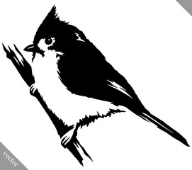 black and white paint draw cardinal bird vector illustration