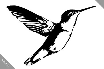 black and white paint draw eagle hummingbird vector illustration