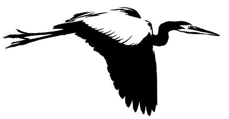 black and white linear paint draw crane bird illustration