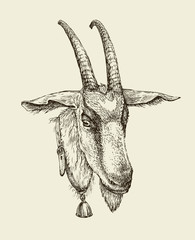 Hand drawn goat. Sketch a farm animal. Vector illustration