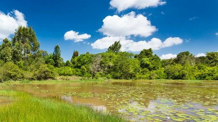 Wall Mural - Timelapse sequence of the beautiful Lily Lake in Karura Forest, Nairobi, Kenya with blue sky in 4K.