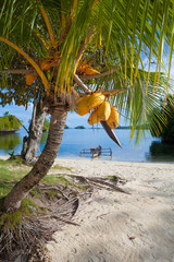 Photo Untouched Tropical Beach in Bali Island. Palm with fruits. Vertical Picture.
