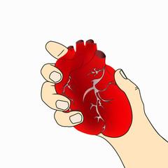 cartoon anatomical heart