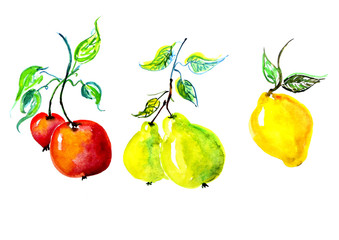 Watercolor set fruit - apple, pear, lemon on a branch with leaves. On an isolated white background