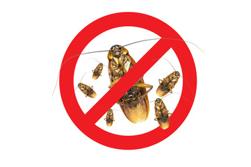 No More Group Cockroach icon ,Sign and dead of a cockroach,Isolated on a white background