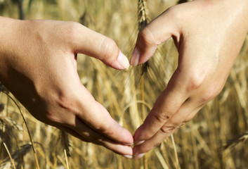 Female hands in the shape of a heart on the background of rye spikelets . Hands in shape of heart love.