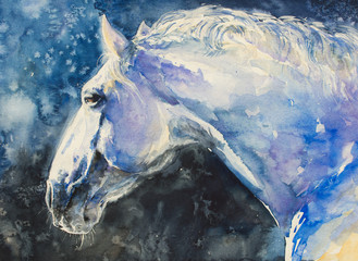 Painting of lipizzaner horse portrait.Picture created with watercolors